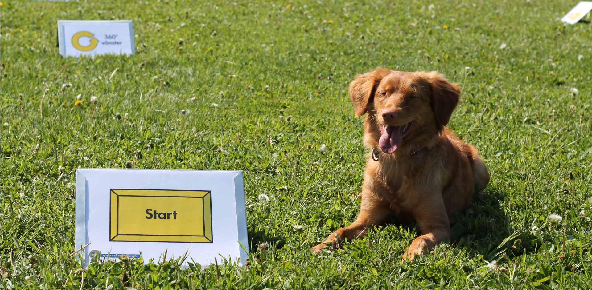 Dagkurs i rallylydnad (1 plats kvar!)   Tailzone Hundsport