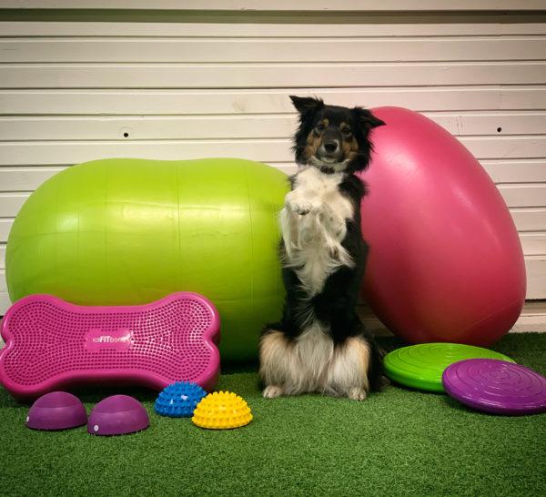 Balansbollskurs hund