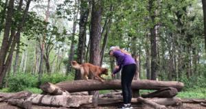 Styrketräna hund