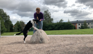 Träna bakben hund