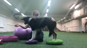 Övning balansboll